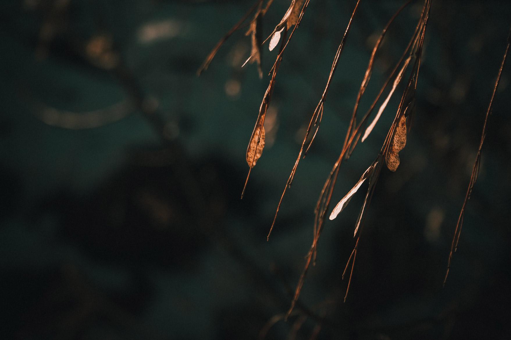 hojas-tonos-texturas