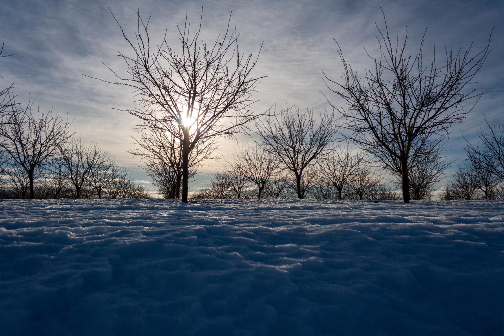 nieve-arboles-acequion